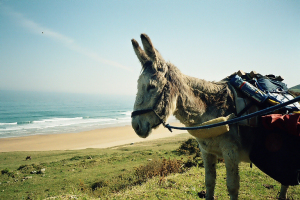 Dalie the pilgrim donkey