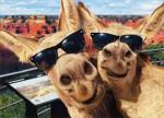 donkey selfie