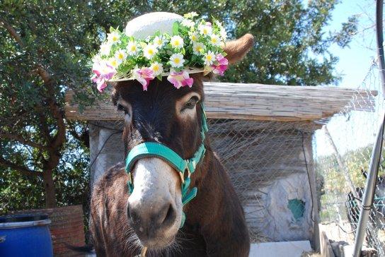 Aitana in her Easter bonnet 2015