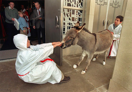 reluctant Palm Sunday donkey2