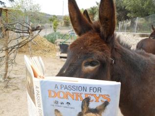 Morris donkey reading