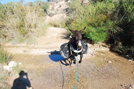 Morris leaping