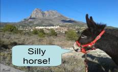 rubi-puig-campana-silly-horse
